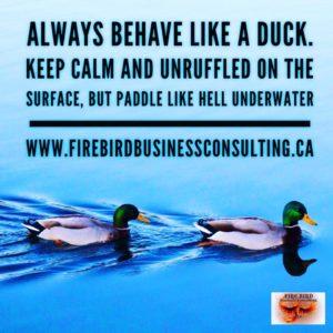 Always behave like a duck - Firebird Business Consulting - Saskatoon - PA - Regina