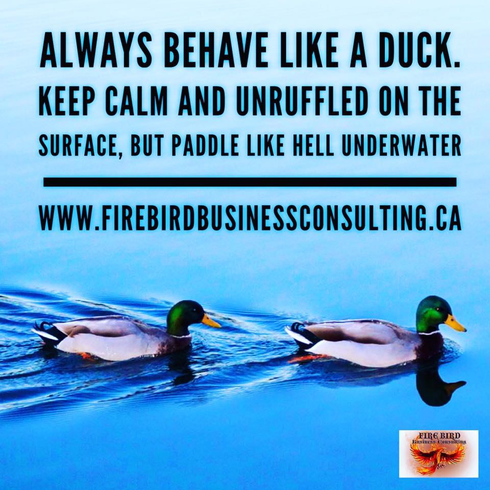 Always behave like a duck – Firebird Business Consulting Ltd – Saskatoon – Regina